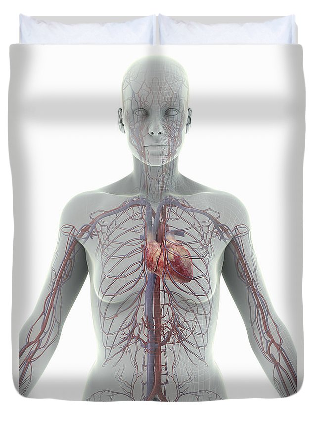 Blood Vessels Duvet Cover featuring the photograph The Cardiovascular System Female by Science Picture Co