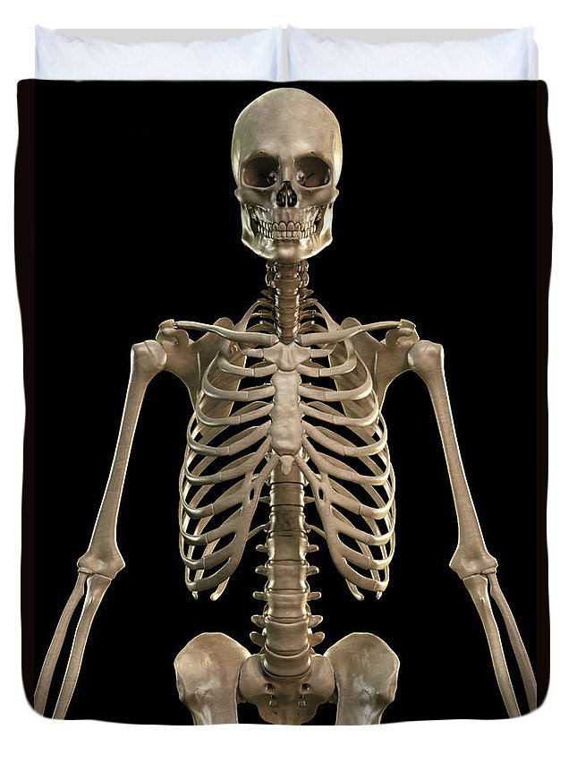 Vertical Duvet Cover featuring the photograph Bones Of The Upper Body by Science Picture Co