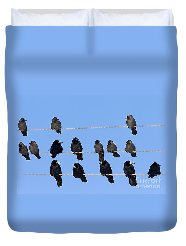 Rook Duvet Cover featuring the photograph 110506p063 by Arterra Picture Library