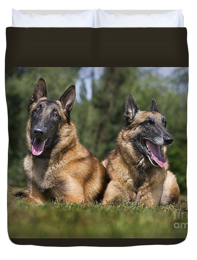 Belgian Shepherd Dog Duvet Cover featuring the photograph 110506p116 by Arterra Picture Library