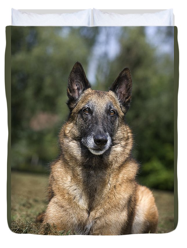 Belgian Shepherd Dog Duvet Cover featuring the photograph 110506p117 by Arterra Picture Library