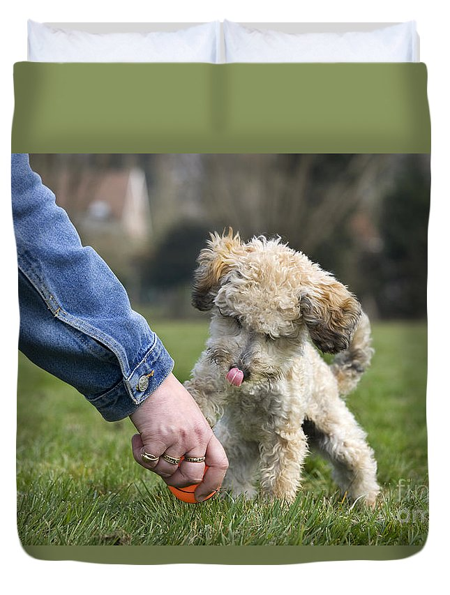 Standard Poodle Duvet Cover featuring the photograph 110506p131 by Arterra Picture Library