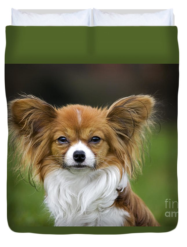 Mammal Duvet Cover featuring the photograph 110506p149 by Arterra Picture Library