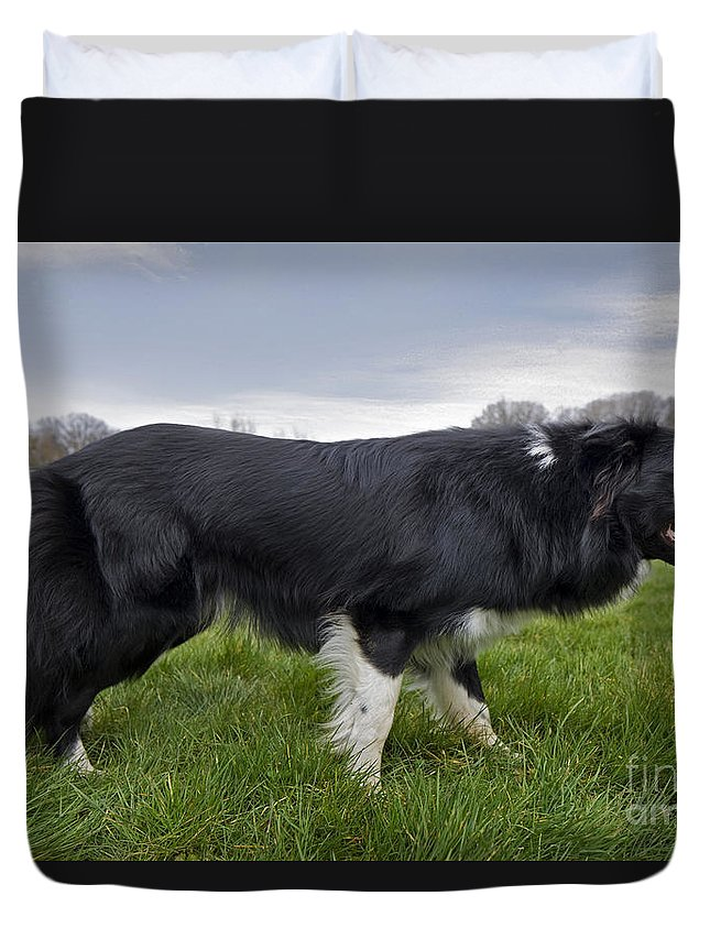 Mammal Duvet Cover featuring the photograph 110506p164 by Arterra Picture Library