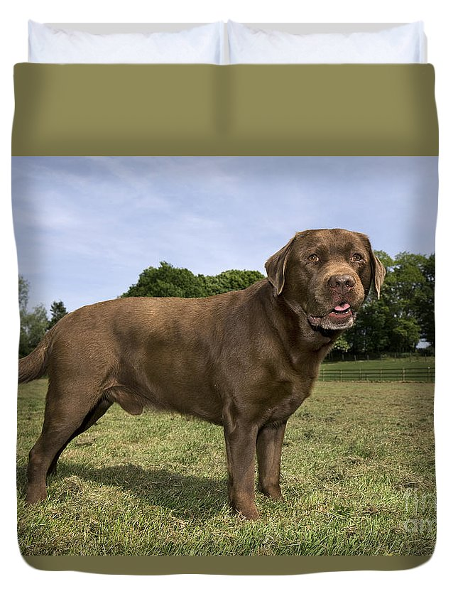 Mammal Duvet Cover featuring the photograph 110506p186 by Arterra Picture Library
