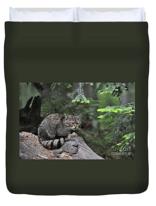 Wildcat Duvet Cover featuring the photograph 110613p008 by Arterra Picture Library
