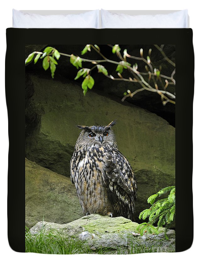 Eurasian Duvet Cover featuring the photograph 110613p013 by Arterra Picture Library