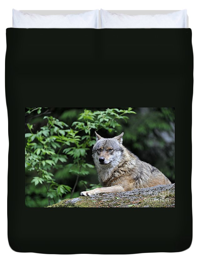 Europe Duvet Cover featuring the photograph 110613p025 by Arterra Picture Library