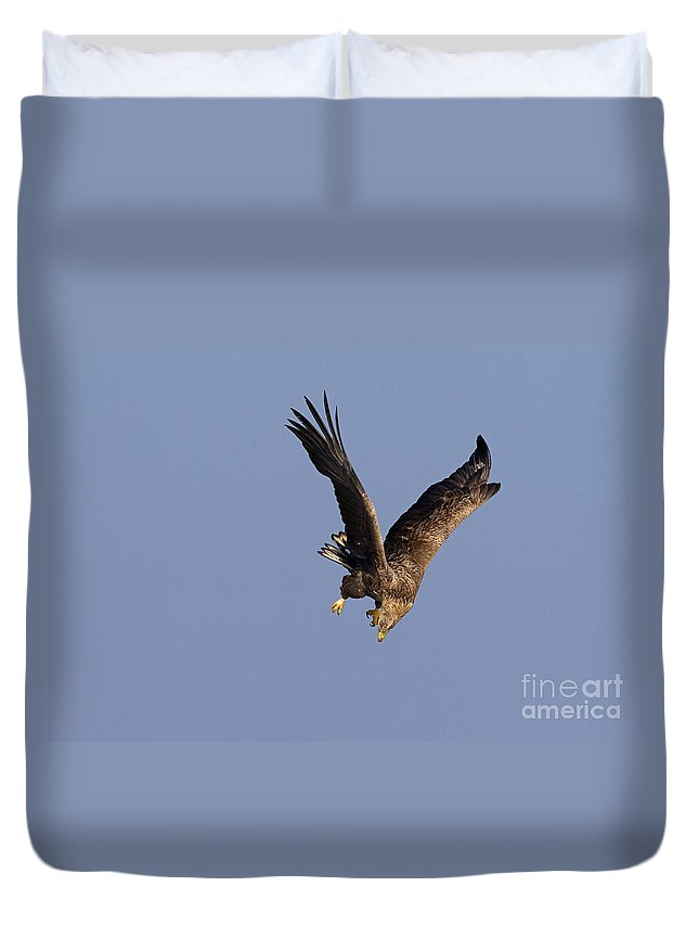 White-tailed Eagle Duvet Cover featuring the photograph 110613p223 by Arterra Picture Library