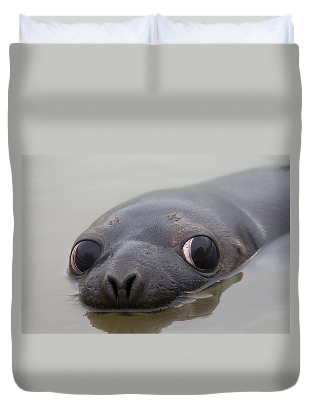 Hooded Seal Duvet Cover featuring the photograph 110714p127 by Arterra Picture Library