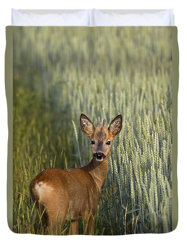 Roe Deer Duvet Cover featuring the photograph 110714p133 by Arterra Picture Library