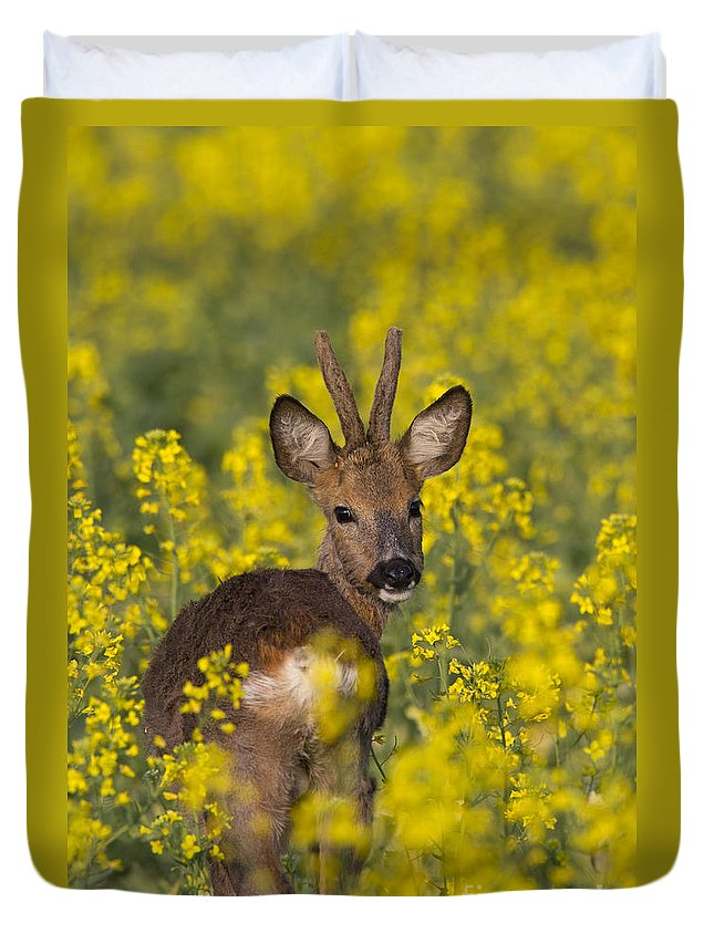 Roe Deer Duvet Cover featuring the photograph 110714p139 by Arterra Picture Library