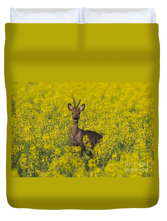 Roe Deer Duvet Cover featuring the photograph 110714p142 by Arterra Picture Library
