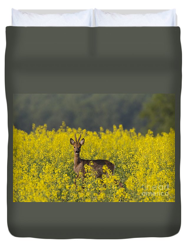 Roe Deer Duvet Cover featuring the photograph 110714p143 by Arterra Picture Library