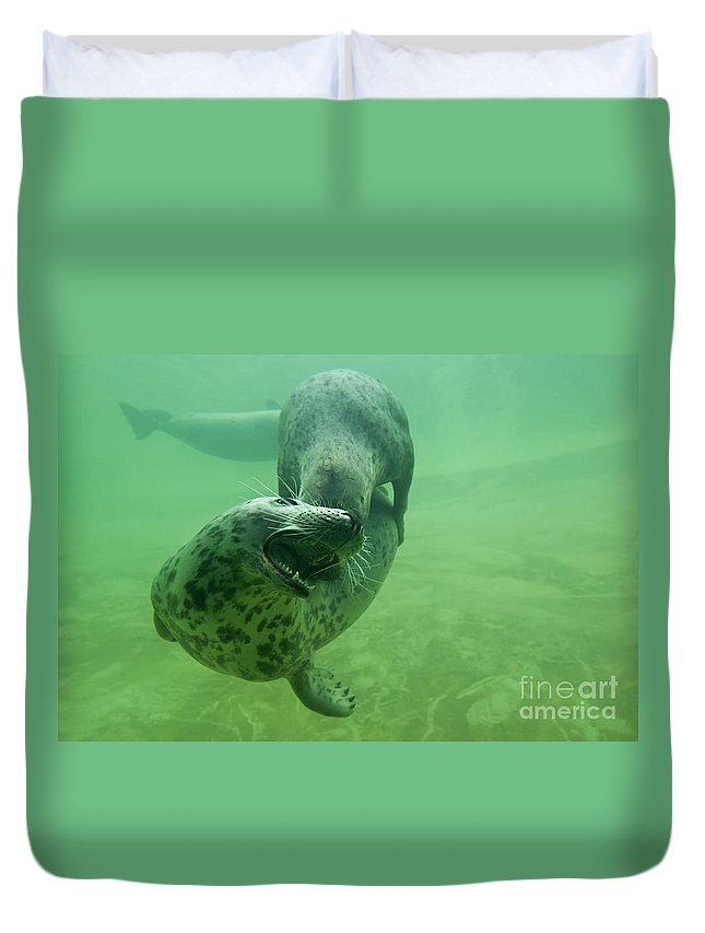 Grey Seal Duvet Cover featuring the photograph 110714p237 by Arterra Picture Library