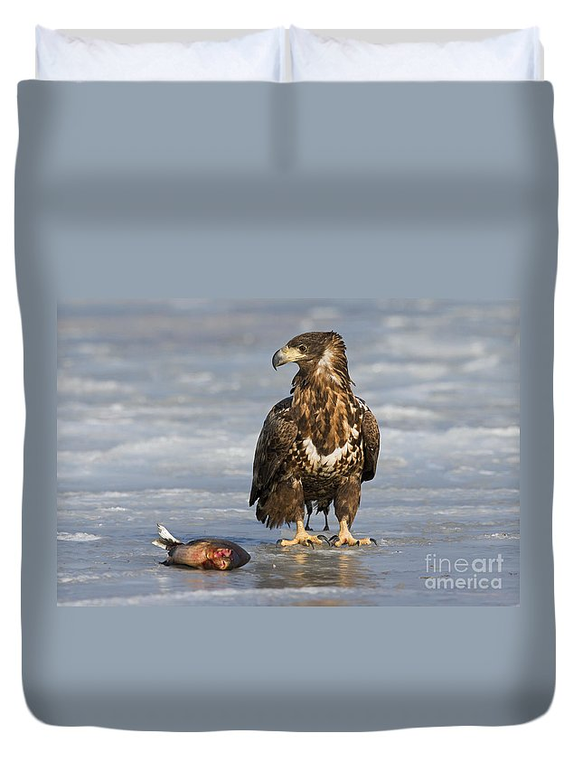 White-tailed Eagle Duvet Cover featuring the photograph 110714p303 by Arterra Picture Library