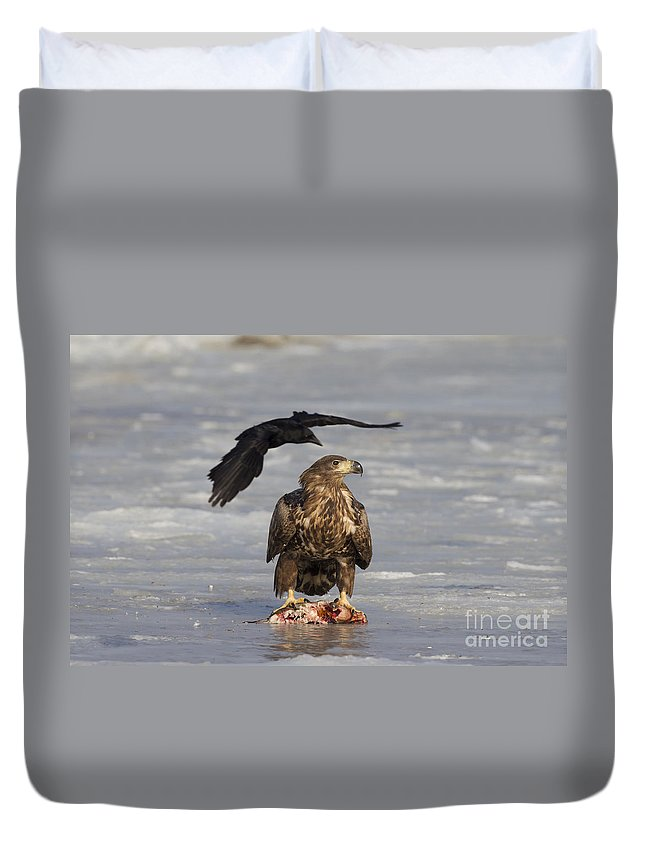 White-tailed Eagle Duvet Cover featuring the photograph 110714p311 by Arterra Picture Library
