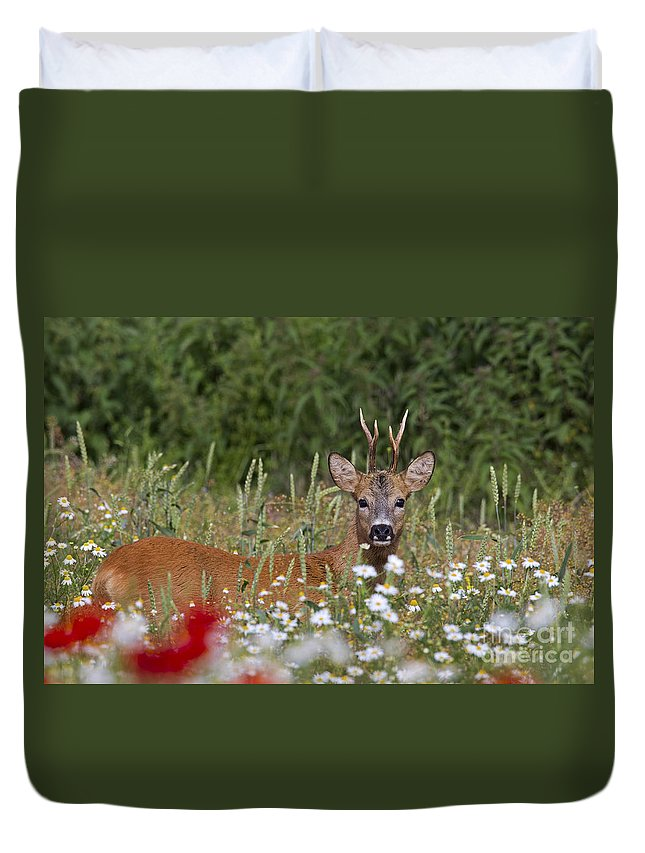 Roe Dee Duvet Cover featuring the photograph 110714p324 by Arterra Picture Library
