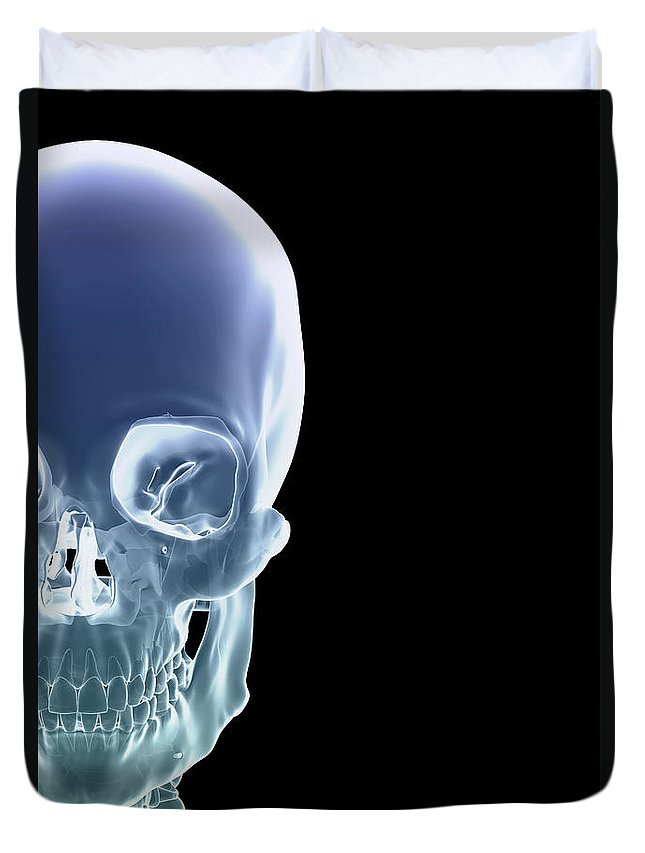 Biomedical Illustration Duvet Cover featuring the photograph The Skull by Science Picture Co