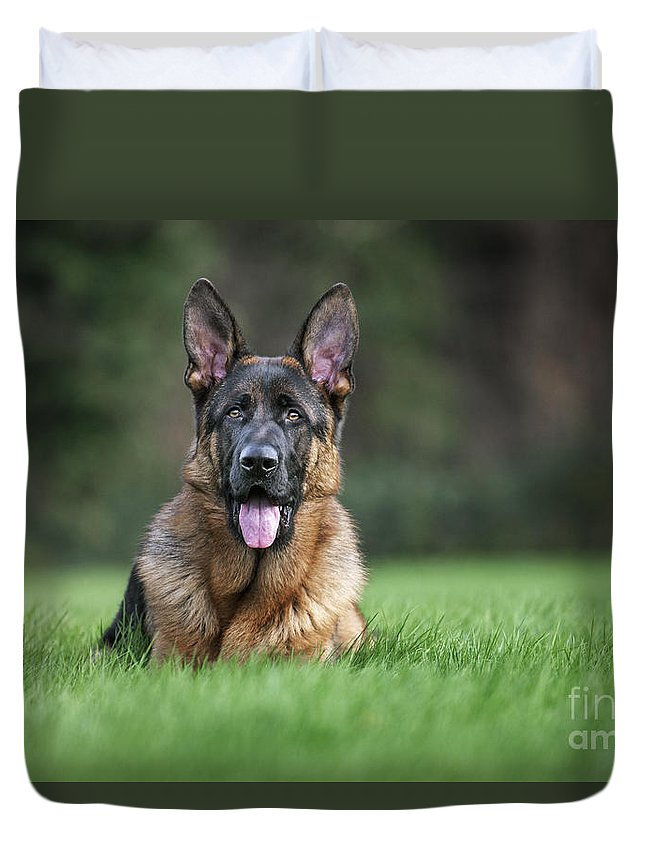 German Shepherd Duvet Cover featuring the photograph 140221p270 by Arterra Picture Library
