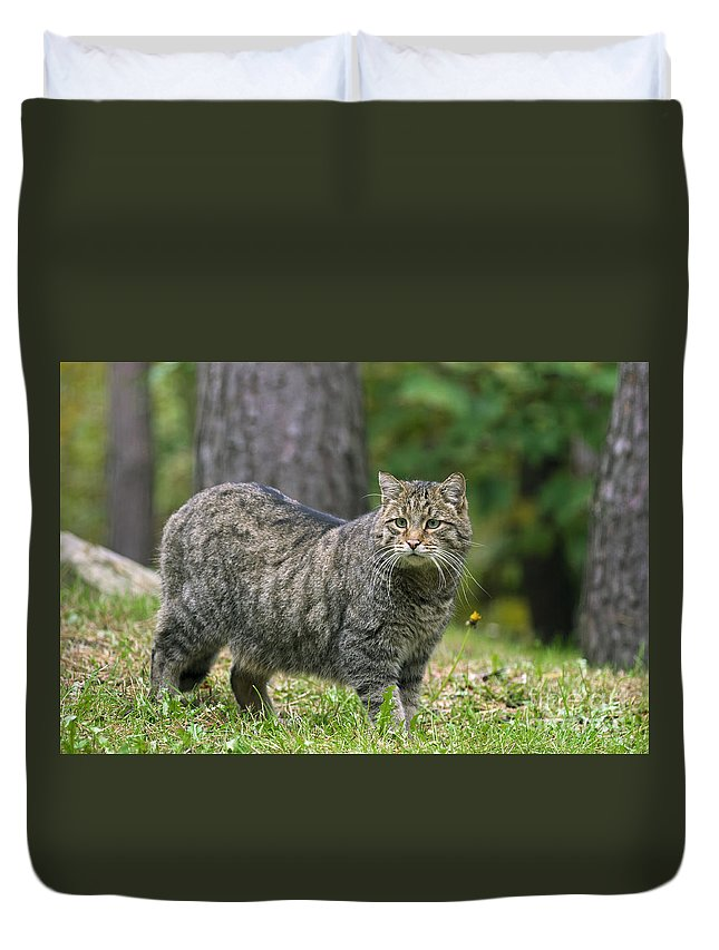 European Wildcat Duvet Cover featuring the photograph 140314p012 by Arterra Picture Library