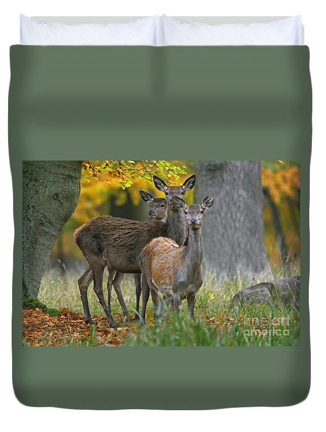 Three Duvet Cover featuring the photograph 140314p099 by Arterra Picture Library