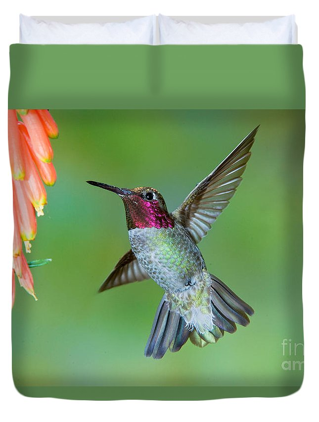 Animal Duvet Cover featuring the photograph Annas Hummingbird by Anthony Mercieca