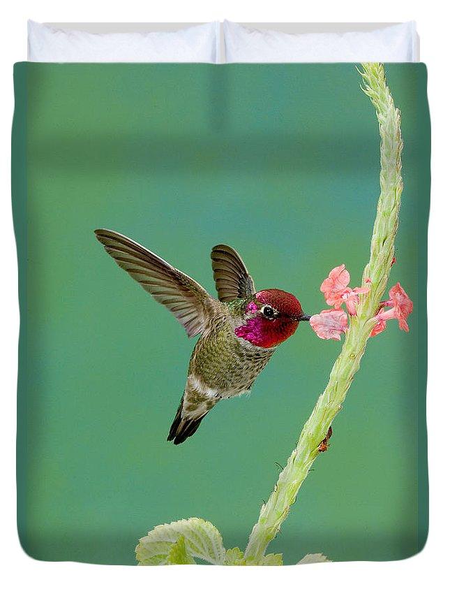 Anna's Hummingbird Duvet Cover featuring the photograph Annas Hummingbird by Anthony Mercieca