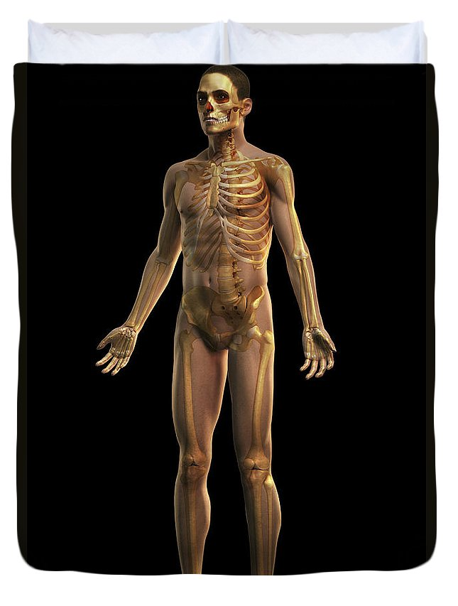 Full View Duvet Cover featuring the photograph The Skeleton by Science Picture Co
