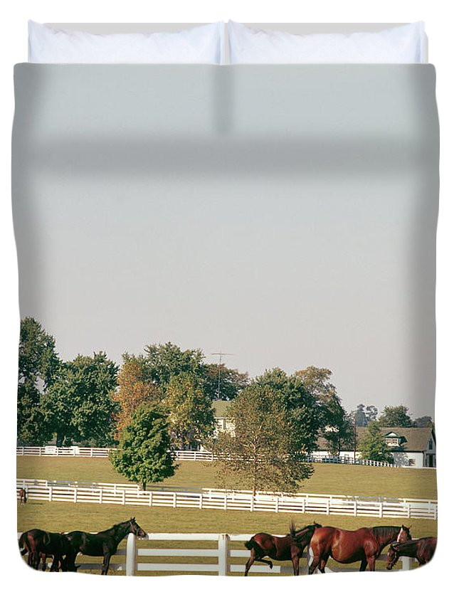 Photography Duvet Cover featuring the photograph 1990s Small Group Of Horses by Vintage Images
