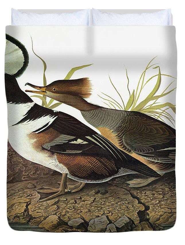 1827 Duvet Cover featuring the painting Audubon Merganser by Granger