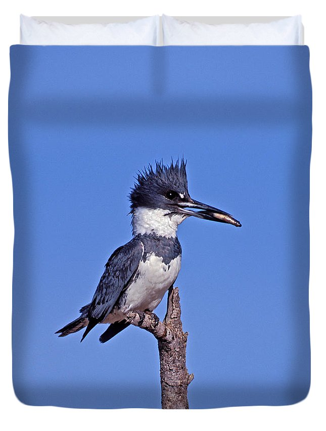 Belted Kingfisher Duvet Cover featuring the photograph Belted Kingfisher With Fish by Anthony Mercieca