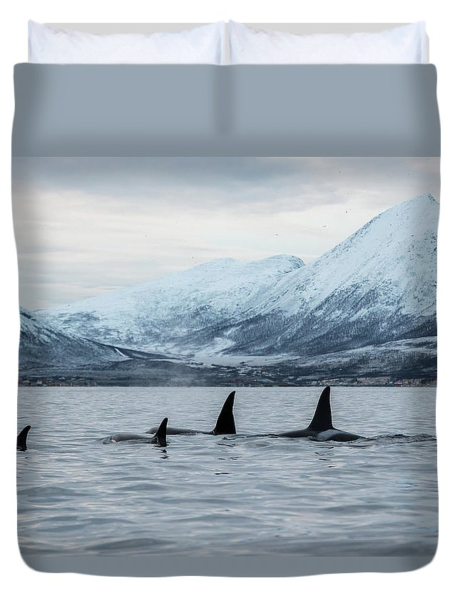 Snow Duvet Cover featuring the photograph 2 Big 2 Small by By Wildestanimal