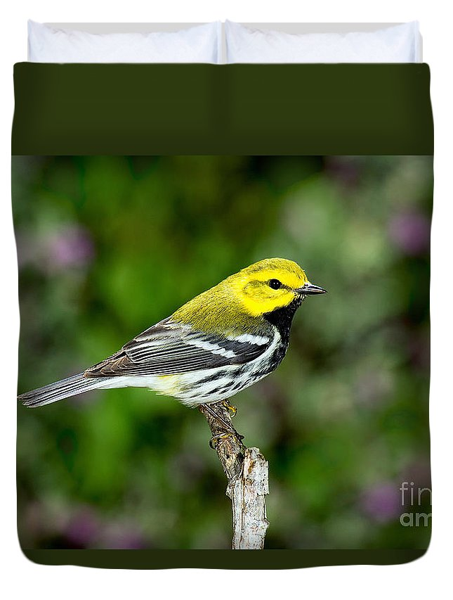 Black-throated Green Warbler Duvet Cover featuring the photograph Black Throated Green Warbler by Anthony Mercieca
