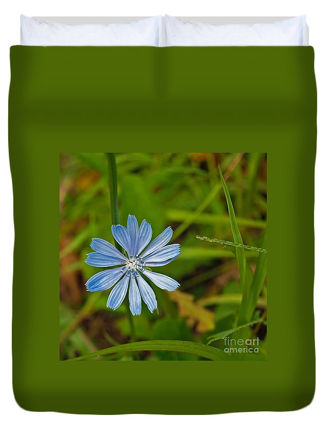 Flower Duvet Cover featuring the photograph Blue Chicory Flower by Howard Stapleton