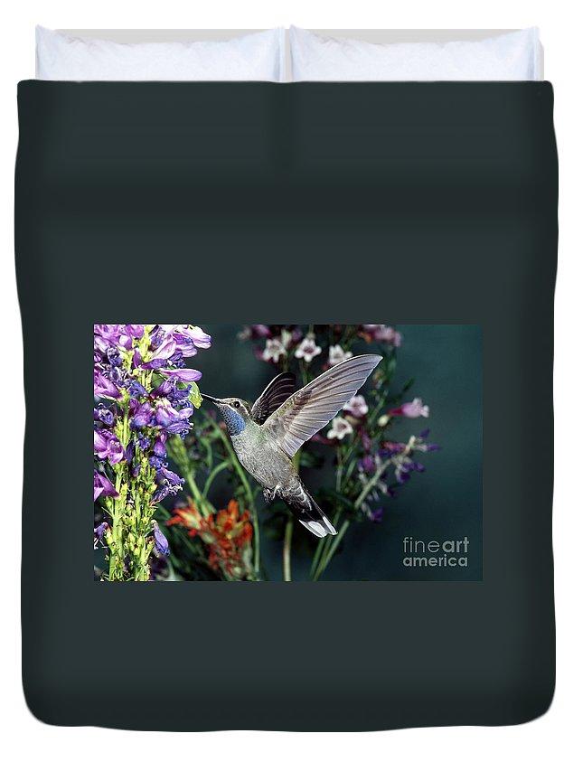 Blue-throated Hummingbird Duvet Cover featuring the photograph Blue-throated Hummingbird by Anthony Mercieca
