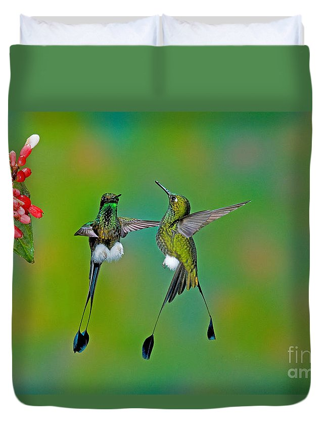 Fauna Duvet Cover featuring the photograph Booted Racket-tail Hummingbird Males by Anthony Mercieca
