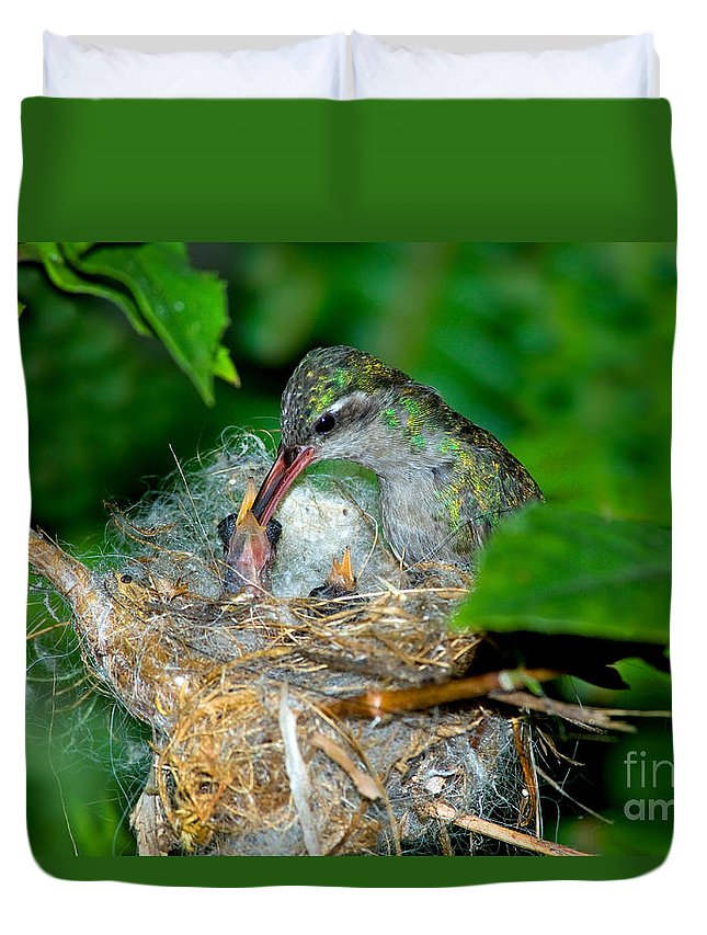 Cynanthus Latirostris Duvet Cover featuring the photograph Broad-billed Hummingbird And Young by Anthony Mercieca