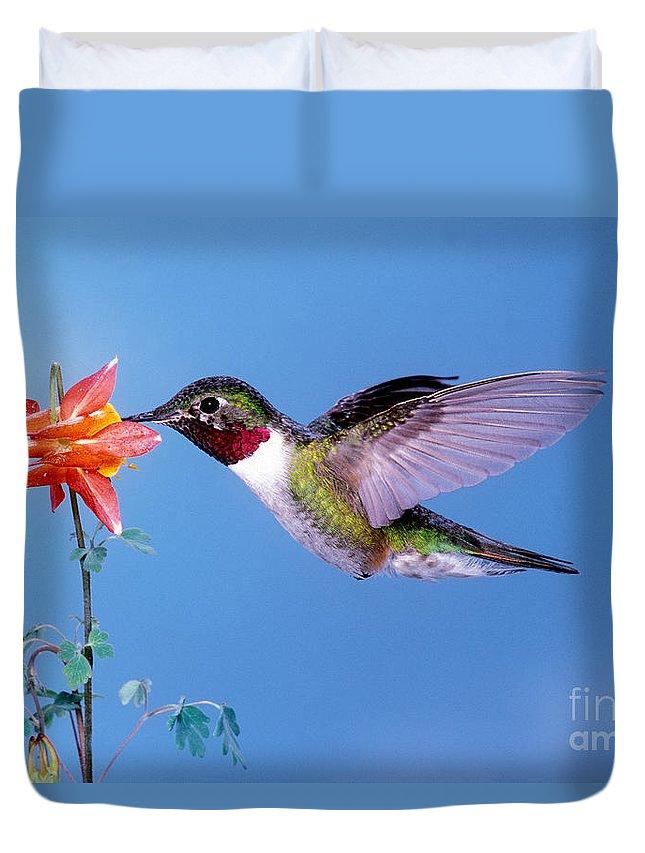 Broad-tailed Hummingbird Duvet Cover featuring the photograph Broad-tailed Hummingbird by Anthony Mercieca