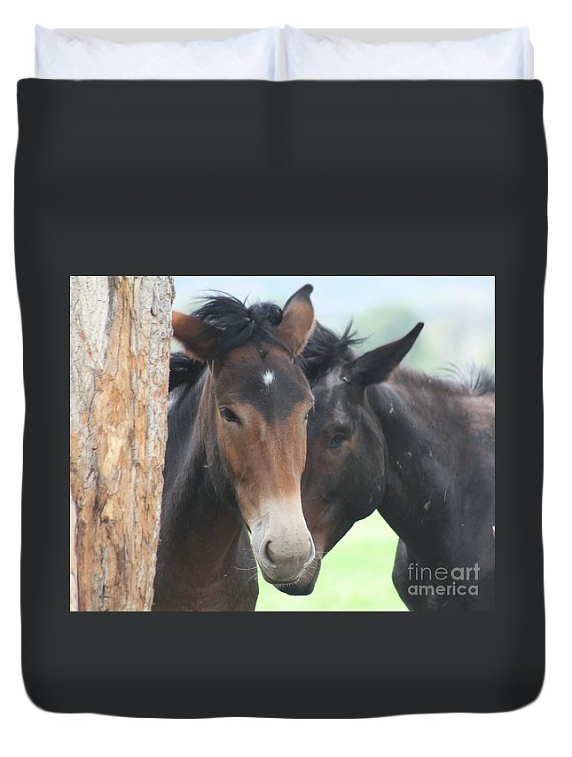 Horses Duvet Cover featuring the photograph Buddies by Brandi Maher