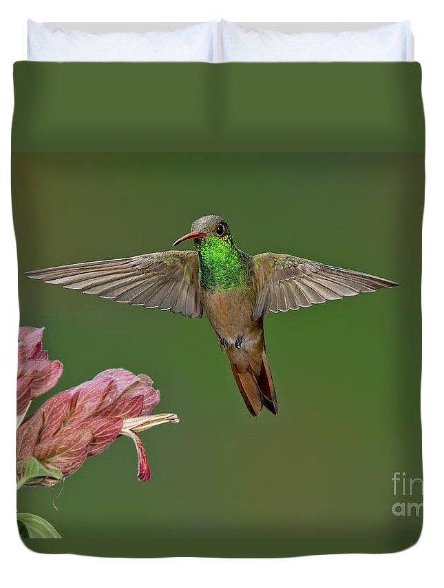 Buff-bellied Hummingbird Duvet Cover featuring the photograph Buff-bellied Hummingbird by Anthony Mercieca