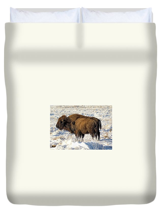 Buffalo Duvet Cover featuring the photograph Buffalo In Winter by Alan Hutchins