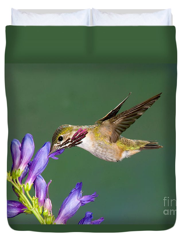 Fauna Duvet Cover featuring the photograph Calliope Hummingbird Stellula Calliope by Anthony Mercieca