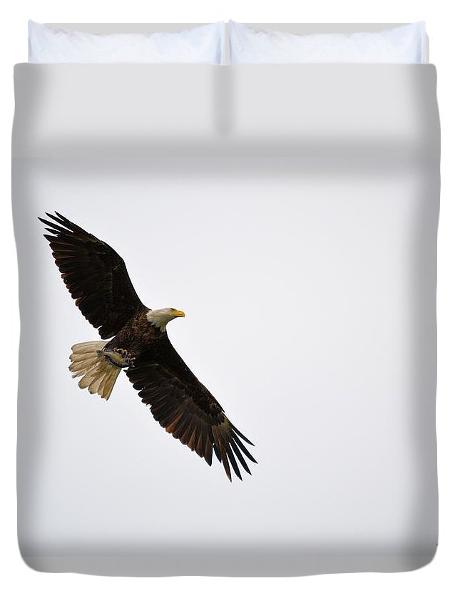 Eagle Duvet Cover featuring the photograph Catch Of The Day by Bonfire Photography