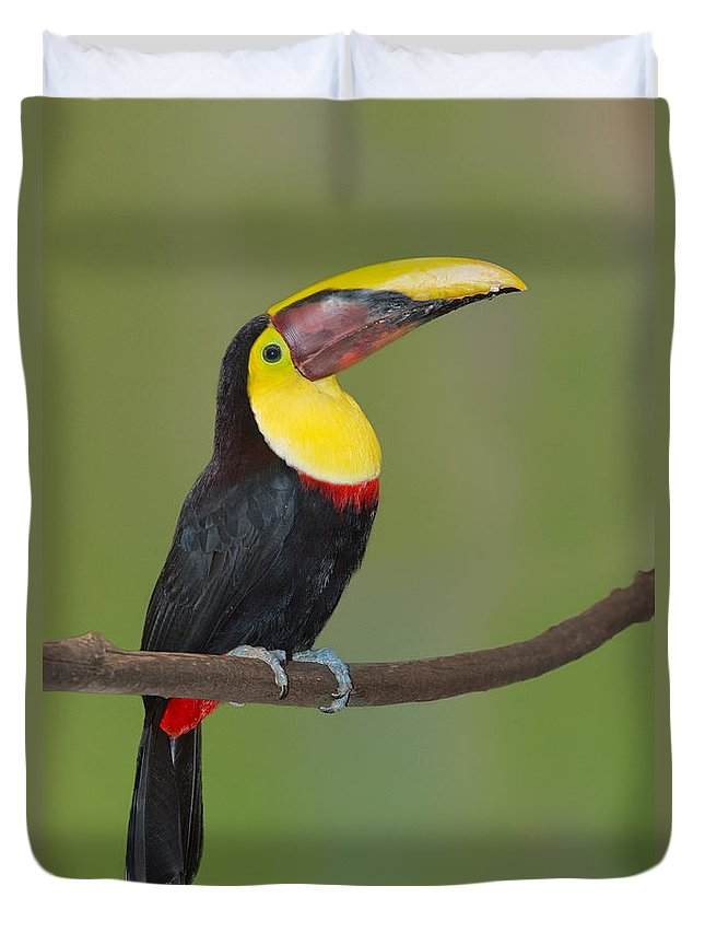 Animal Duvet Cover featuring the photograph Chestnut-mandibled Toucan by Anthony Mercieca