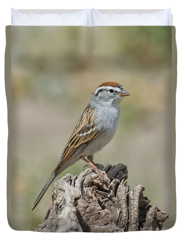Chipping Sparrow Duvet Cover featuring the photograph Chipping Sparrow by Anthony Mercieca