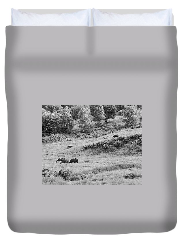 Cow Duvet Cover featuring the photograph Cows Grazing In Field Rockport Maine by Keith Webber Jr