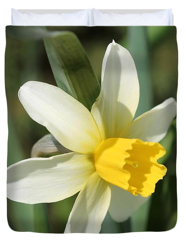 Mccombie Duvet Cover featuring the photograph Cyclamineus Daffodil Named Jack Snipe by J McCombie