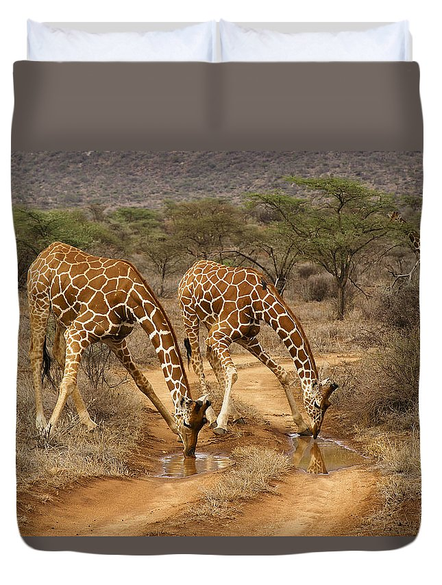 Africa Duvet Cover featuring the photograph Drinking in Tandem by Michele Burgess