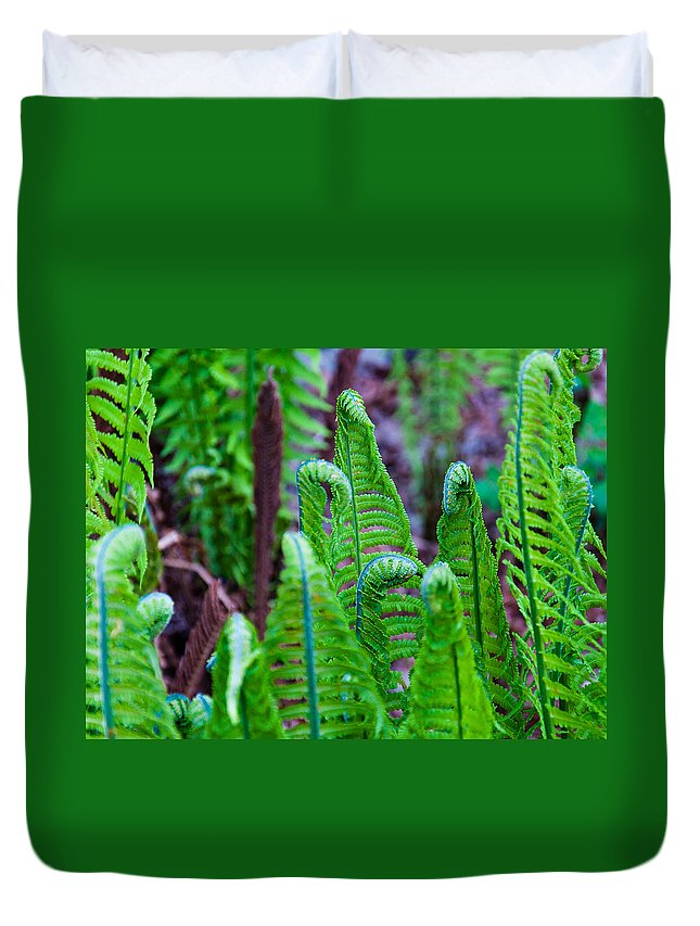 Green Color Duvet Cover featuring the photograph Earth Horses by Yevgeni Kacnelson